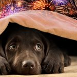 Keeping your Pets Safe During Fireworks Displays